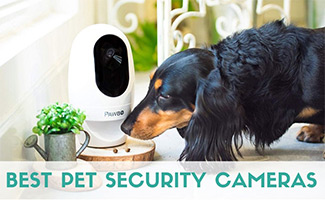 Dog next to pet camera (caption:Best Pet Security Cameras)