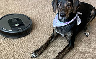 Sally the dog sitting next to iRobot vacuum