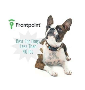 Dog sitting next to FrontPoint logo